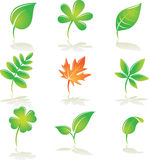 Leaves set. Elements for design. Vector illustration Stock Photos