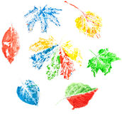 Leaves set Royalty Free Stock Images