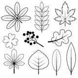 The leaves of a set of sketches. Set of leaves in the form of sketches on a white background Royalty Free Stock Photos