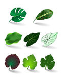 Leaves set/ vector eps 10 Stock Images