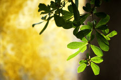 Leaves in the shadow. The green leaves show their texture by sunlight Stock Photography