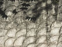 Leaves shadow on Crescent troweled concrete pattern background Royalty Free Stock Photography