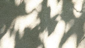 Leaves shadow moving on the wall. In the day stock footage