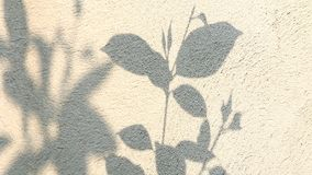 Leaves shadow moving on the wall. In the day stock video