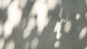 Leaves shadow moving on the wall. In the day stock video footage