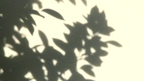 Leaves shadow on the wall , chiangmai Thailand.  stock video