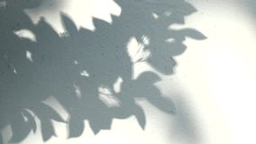 Leaves shadow on the wall , chiangmai Thailand.  stock video footage