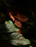 Leaves in the shadows. Green and brown leaves in the shadows royalty free stock photo