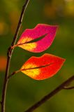 Leaves in the shape of lips Royalty Free Stock Images