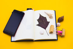 Leaves with shells placed on the book. Royalty Free Stock Images