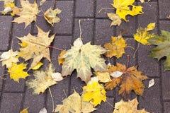 Leaves on the sidewalk, autumn Stock Photos