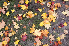 Leaves on the sidewalk, autumn Royalty Free Stock Photo