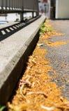 Leaves on sidewalk Stock Image