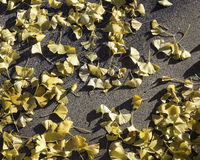 Leaves on the sidewalk. Yellow leaves that have fallen from the trees Stock Photography