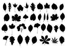 Leaves silhouette. Blask set of leaves isolated on white background royalty free illustration