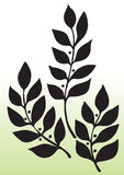 Leaves silhouette. Silhouetted of black leaves of plant or tree with gradient green background Royalty Free Stock Photos