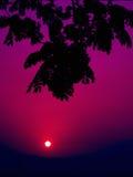 leaves silhouetted soluppgång Arkivbilder