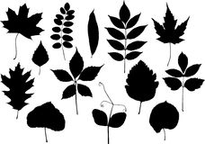 Leaves silhouettes Stock Image