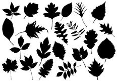 Leaves silhouettes Royalty Free Stock Photos