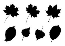 Leaves Silhouettes Set. Set of 7 silhouettes of leaves (maple; birch; elm; chokeberry Stock Photography