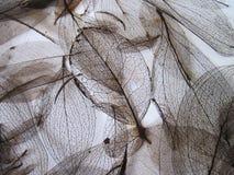 Leaves skeletons pattern Stock Photos