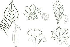 Leaves sketch Royalty Free Stock Photos