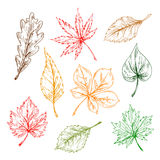 Leaves sketches set. Hand drawn illustration Stock Images