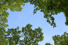 Leaves in sky. Trees overhead frame the sky Stock Photo
