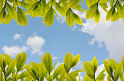 Leaves and  sky background. Leaves and blue sky background Royalty Free Stock Photos