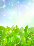 Leaves sky background soap bubble Royalty Free Stock Image