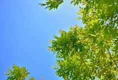 Leaves on sky Royalty Free Stock Photos