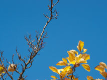 Leaves and sky Stock Image