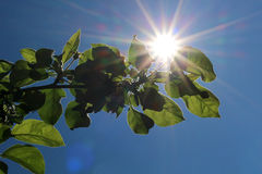 Leaves on sky Stock Photography