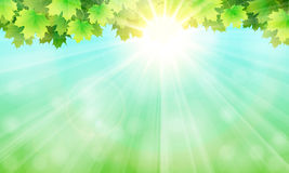 The leaves, the sky and the sun Stock Photography