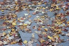 Leaves of Slate Stock Images