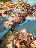 Leaves on a sluice in a stream Stock Images