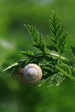 Leaves and snail Royalty Free Stock Image