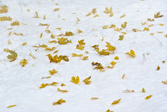 Leaves on snow Stock Images