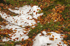 Leaves and snow Royalty Free Stock Photography