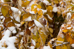 Leaves in the snow outdoors Stock Image