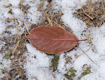 Leaves in the snow outdoors Stock Photo