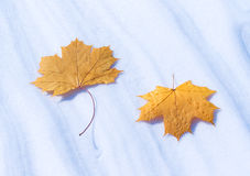 Leaves on snow Royalty Free Stock Photo