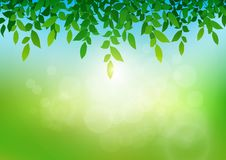 Leaves with soft bright bokeh and sunlight, fresh green nature background. Vector illustration vector illustration