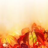 Leaves on soft color background. Autumn red leaves on soft color background Royalty Free Stock Photos