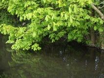 leaves som reflekterar Fotografering för Bildbyråer
