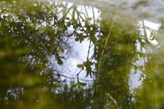 leaves som reflekterar vatten arkivbilder