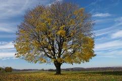 leaves som utgjuter treen Arkivbild