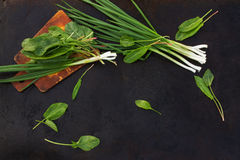 Leaves of sorrel and green onion on cutting board on a dark ba. Leaves of sorrel and green onion on cutting board on a dark metallic background. blackout photo stock photography