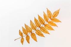 Leaves specimen Stock Photo