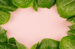 Leaves spinach as frame on pink background. Healthy dieting spring food. Leaves spinach as frame on pink background. Healthy dieting spring food Stock Photo